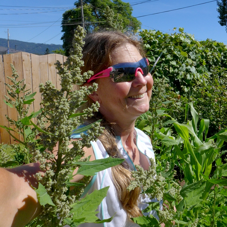 growing quinoa in a backyard vegetable garden